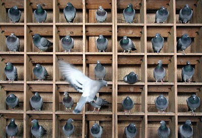 don't pigeon hole your teaching